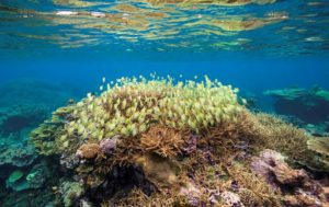 A school of Manini (convict tangs) swim across the colorful coral reefs at Palmyra Atoll. Photo by Tim Calver ©