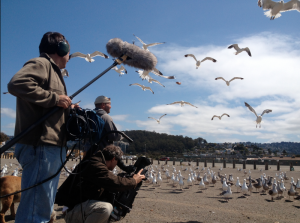 Filming a relationship with seagulls.