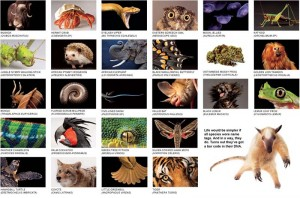 The Big Picture - Biodiversity.