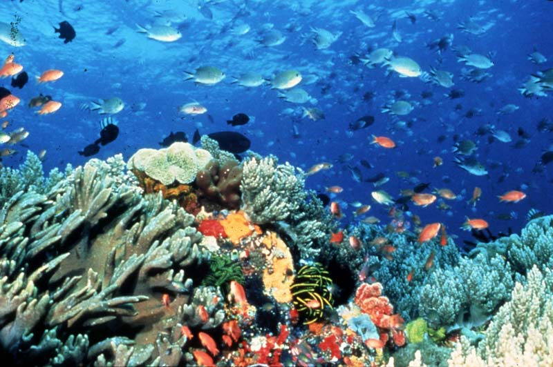 a brief look at coral reefs in the world Ask: have you ever heard the term biodiversity  tell students they will watch a  brief video about coral reef ecosystems 2  while they wait, have them look at  the coral reef ecosystem illustration and its key, identify their reef creature, and .