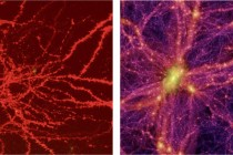 Neurons in a mouse brain on the left and a simulated image of the universe.
